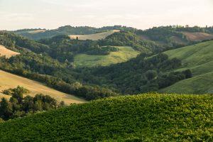 Conventino Monteciccardo Landscape Paesaggio